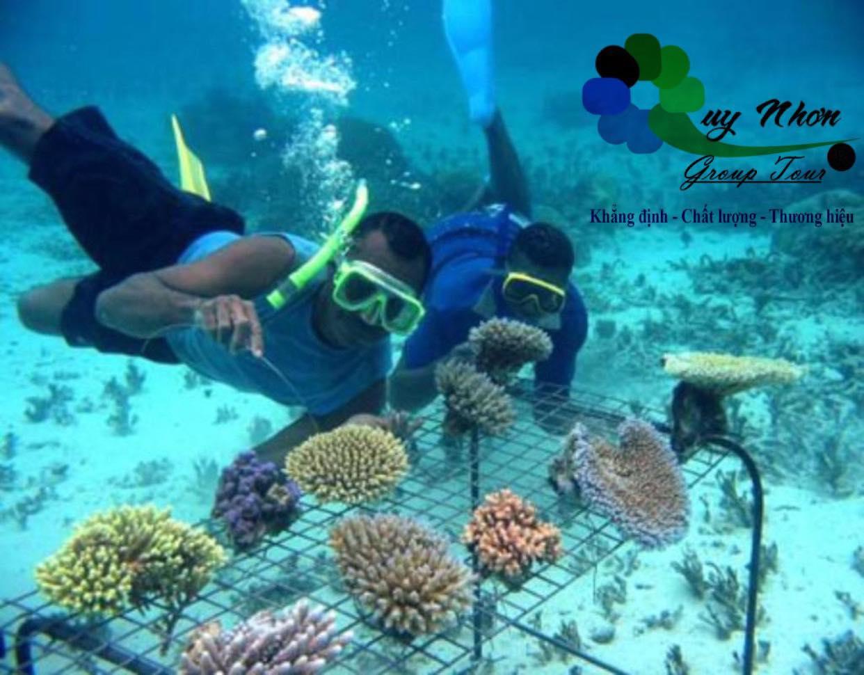 TOUR GHÉP 2 ĐẢO QUY NHƠN 1 NGÀY:  Kỳ Co – Hòn Khô – kết hợp Lặn ngắm san hô – Eo Gió